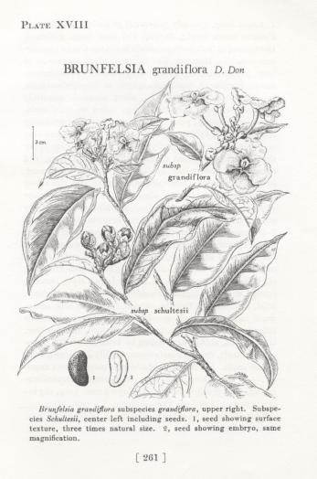 botanicals 047