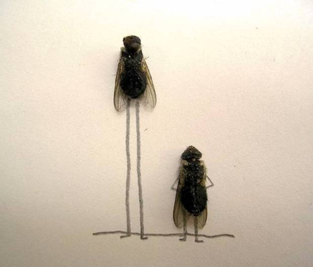flies tall and short