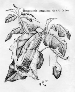 botanicals-001