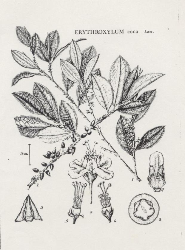 botanicals 031